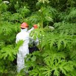 Invázne rastliny
