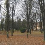 Ochrana drevín v mestskom prostredí