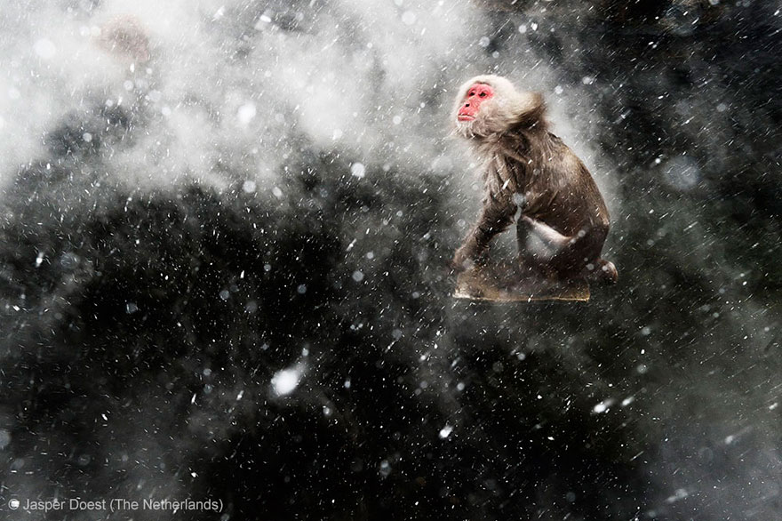 wildlife-photographer-of-the-year-2013-12