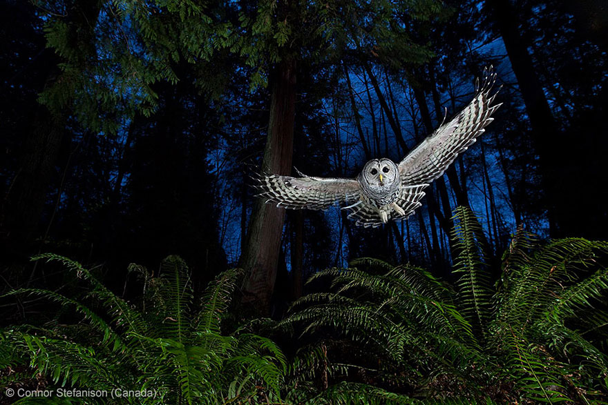 wildlife-photographer-of-the-year-2013-15