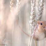 15 výherných fotografií súťaže The Wildlife Photographer of the Year 2013