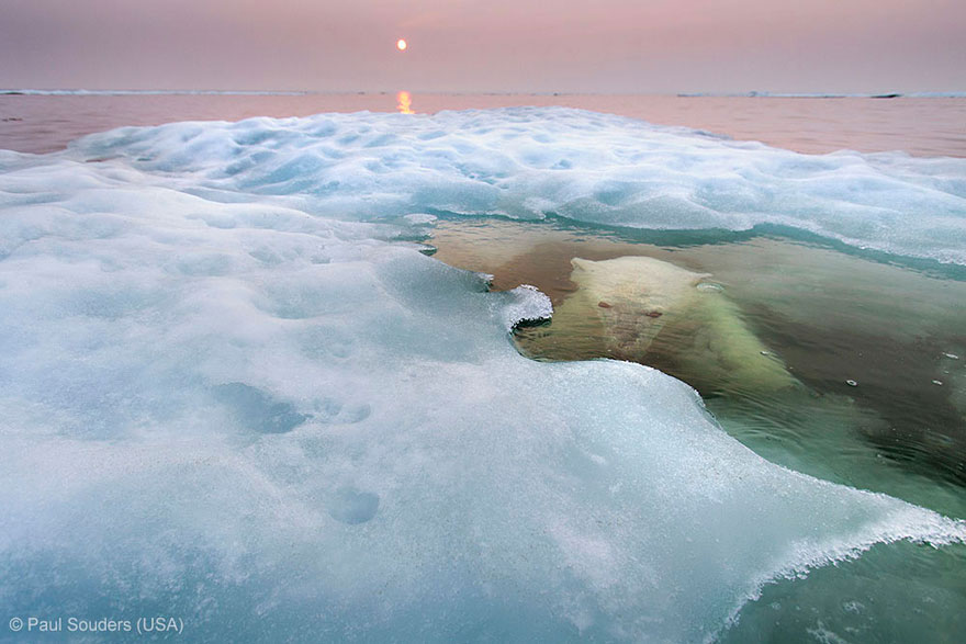 wildlife-photographer-of-the-year-2013-5