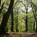 Výrub stromov na bratislavskej Kolibe bol nelegálny