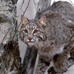 Záujem o ochranu biodiverzity v EÚ stúpa