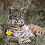 Kriticky ohrozené živočíchy Európy