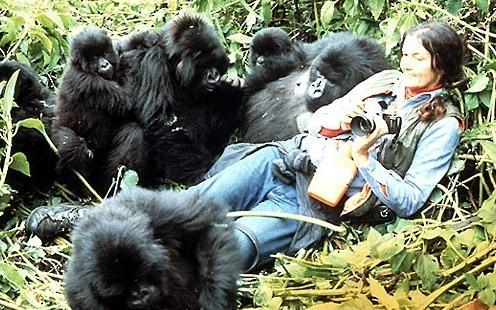 Dian-Fossey3