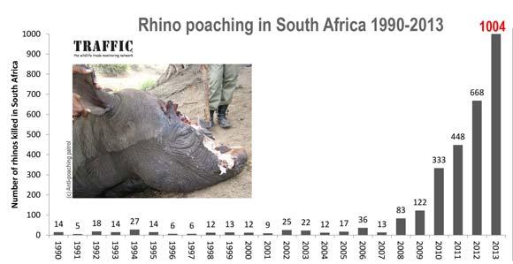 Rhino-graph-1990-2013-580