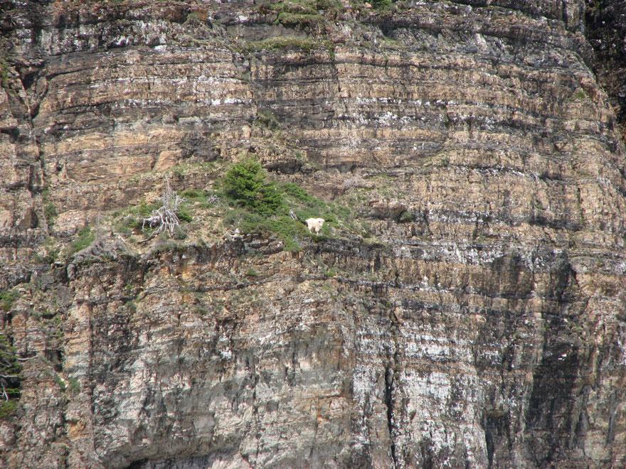 crazy-goats-on-cliffs-21