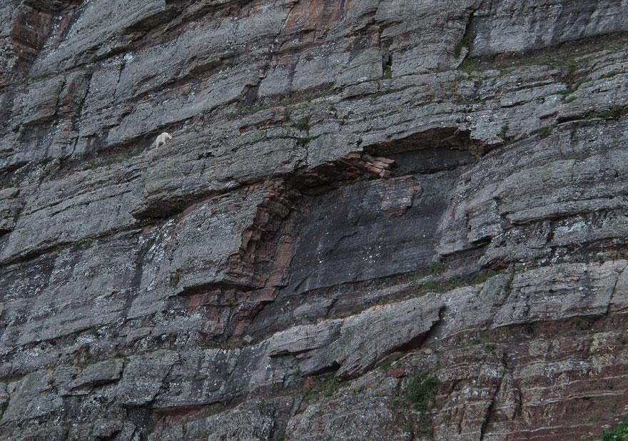 crazy-goats-on-cliffs-22