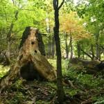 Pralesy pod Suchým vrchom (NP Veľká Fatra) sa stali prírodnou rezerváciou