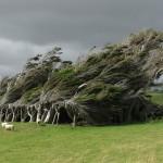 Extrémny antarktický vietor sformoval stromy na Novom Zélande do jedinečných tvarov