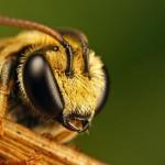 V mestách používajú včely na budovanie úľov plasty