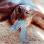 Plastové tašky-vážna hrozba pre životné prostredie