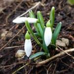 Do Tatier prišla jar