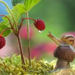 Magický miniatúrny svet slimákov
