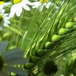 Európska Komisia navrhuje zvýšiť počet a kvalitu ekologických výrobkov