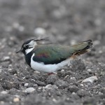 SOS/BirdLife Slovensko: Vláda schválila nový Program rozvoja vidieka