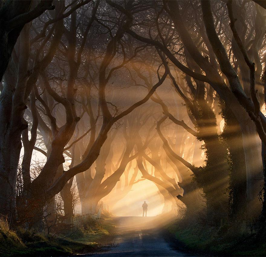 stromy_tunel1
