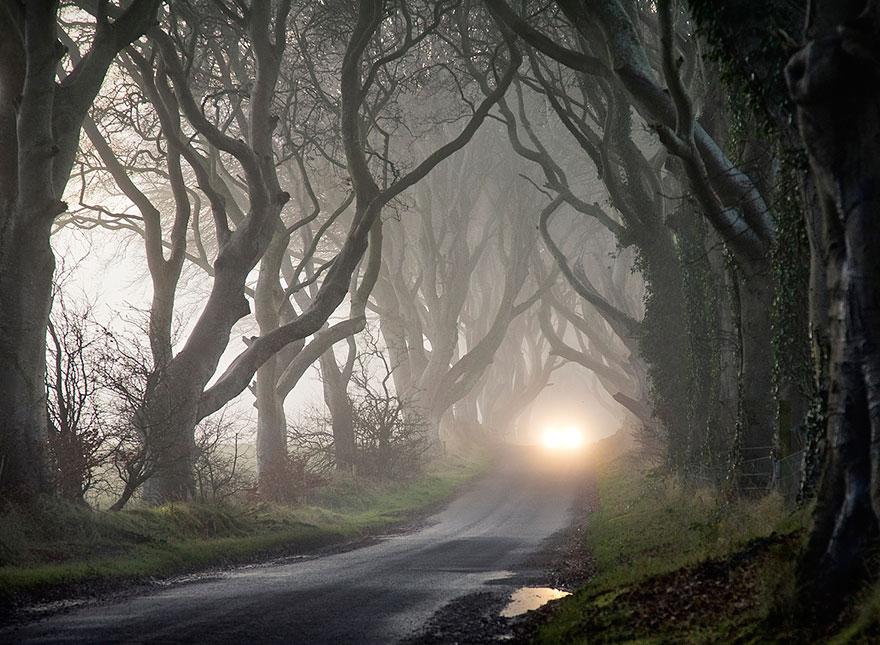 stromy_tunel10
