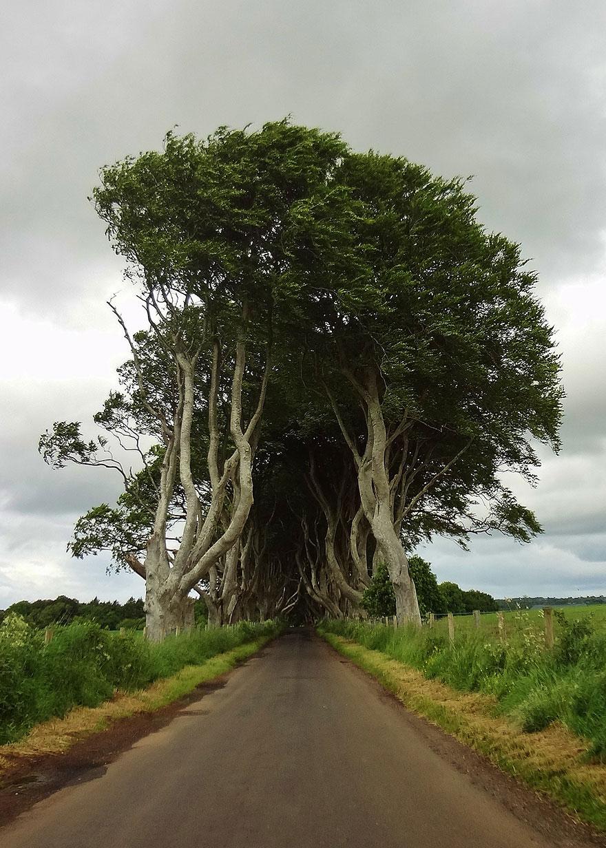stromy_tunel11