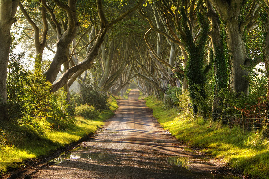 stromy_tunel2