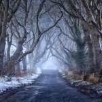 Jedinečný stromový tunel, ktorý ste mohli vidieť v Game of Thrones je SKUTOČNÝ  a môžete ho nájsť v Severnom Írsku