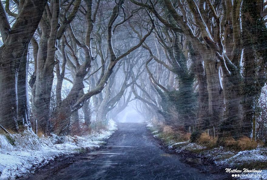 stromy_tunel3