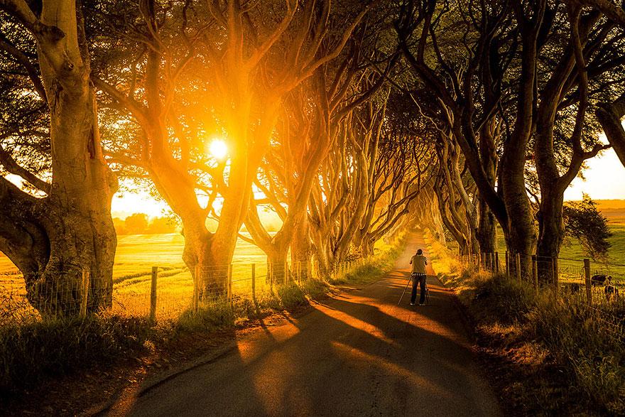 stromy_tunel4