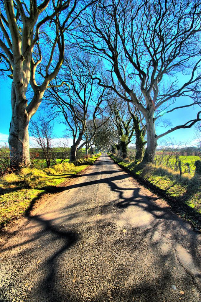 stromy_tunel5