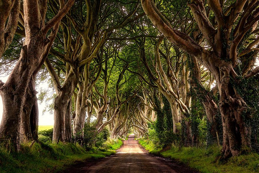 stromy_tunel6
