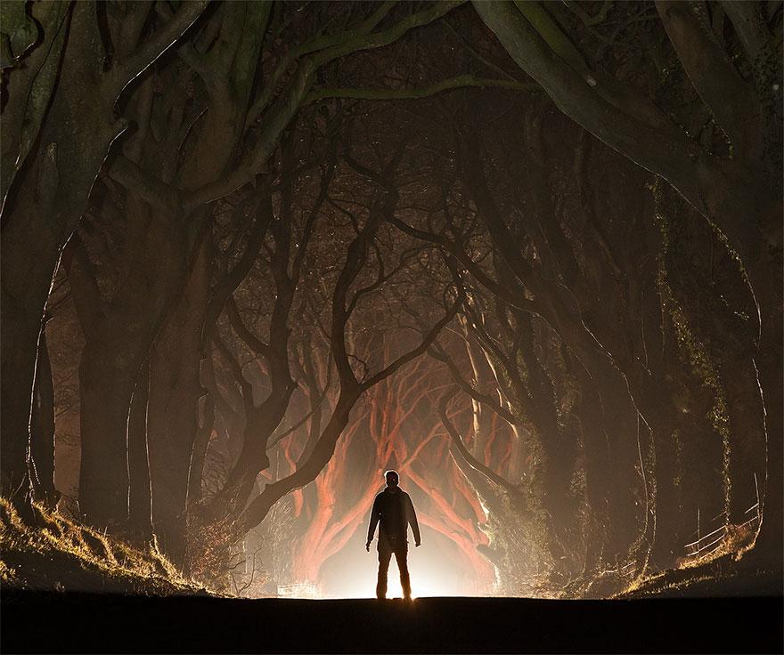 stromy_tunel7