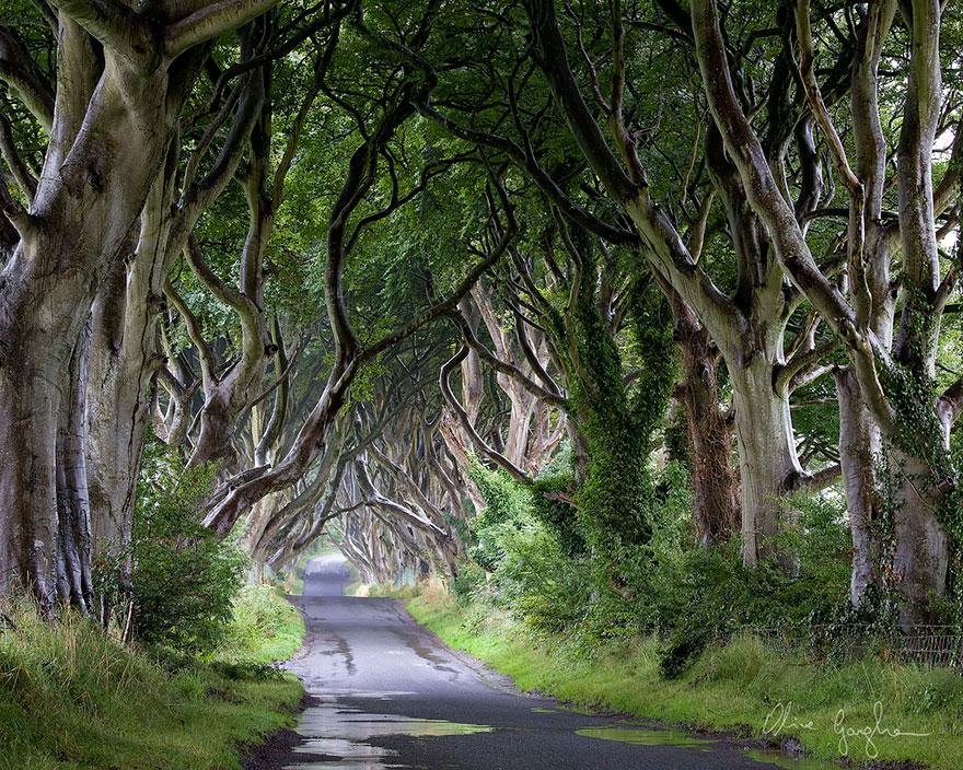 stromy_tunel8