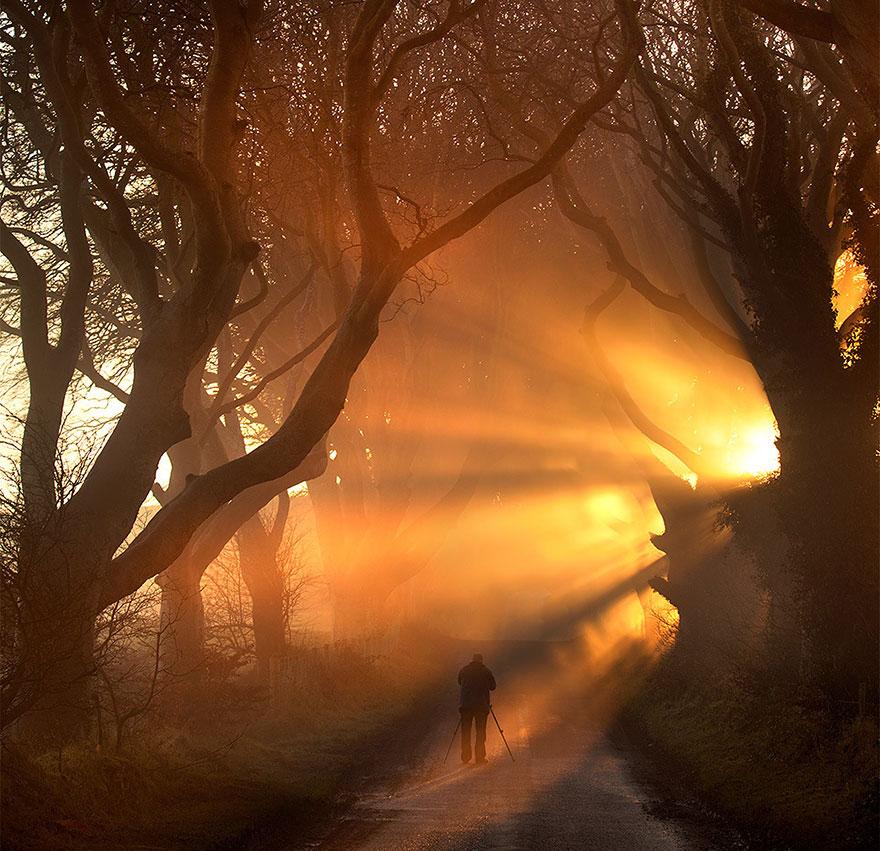 stromy_tunel9
