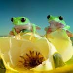 Magický svet žiab odhalený fotografkou Wil Mijer