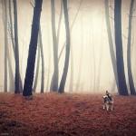 Mystické španielske lesy zachytené fotografom Guillermom Carballom