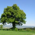 Hlasujte za strom roku 2014