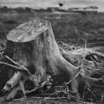 Jesenný výrub stromov