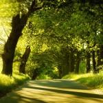 O stromoch