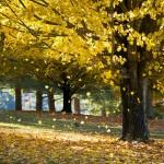 Čo dokážu stromy
