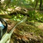 Ako zachrániť strom
