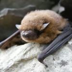 Leták o ochrane vtákov a netopierov