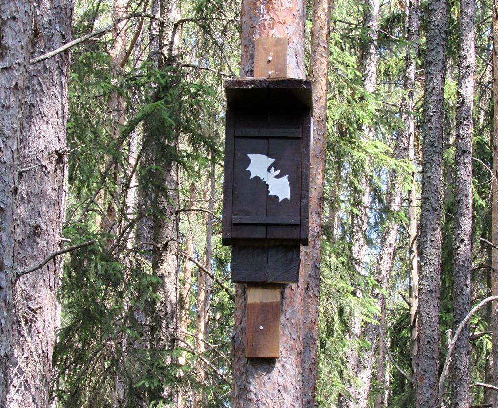 vyvesená búdka pre netopiere