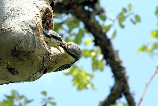 bird-18296_640