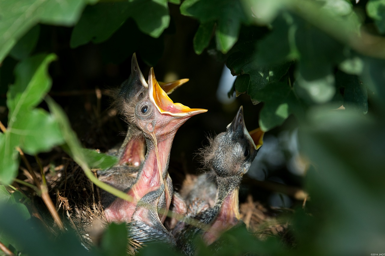 nest-384896_1280