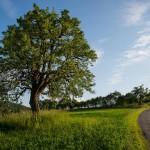 Stromom roka 2015 sa stala hruška z Bošáce