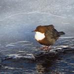 Medzinárodné sčítanie vodného vtáctva 2018